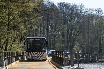 Zoologická zahrada ve Dvoře Králové nad Labem na Trutnovsku zahájila 19. dubna 2019 otevřením areálů afrického a lvího safari hlavní sezonu. Návštěvníci zde mají možnost mezi volně žijícími zvířaty projíždět vlastním autem, safaribusem nebo takzvaným safari truckem. Hlavní letošní novinkou v části safari je nově postavený most (na snímku) přes jednu z vodních ploch.