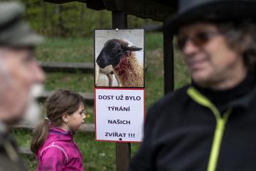 Chovatelé z Broumovska se 10. května 2019 poprvé připojili k mezinárodní akci za ochranu pastevectví před vlky. Večer ve Vernéřovicích na Broumovsku vzplála protestní vatra. Desítky chovatelů tím chtějí vyslovit nesouhlas s návratem vlků. První smečka na Broumovsku po 250 letech byla potvrzena v roce 2015.