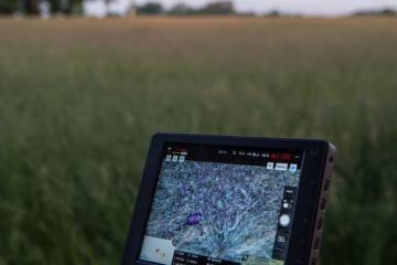 Dobrovolníci pátrali 12. června 2019 pomocí dronů s termovizí po srnčatech (fialový bod na termovizi) na loukách u Ortvínovic na Českobudějovicku. Když s jejich pomocí objeví srnče, zvíře vynesou, případně ho vyplaší.
