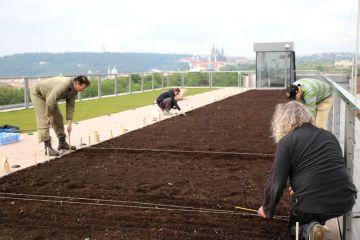 Vědci na střeše Národního zemědělského muzea v Praze vysázeli přes 21 zemědělských plodin.