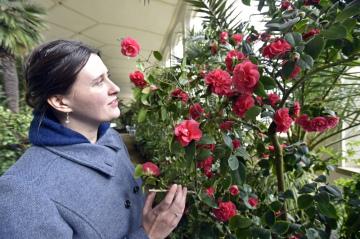 Květná zahrada v Kroměříži zahájila 14. února 2020 výstavu rozkvetlých kamélií ve Velkém a Palmovém skleníku. Tradiční výstava okrasných rostlin je letos tematicky svázána s rokem 1920.