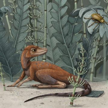 Kongonaphon kely na ilustračním obrázku  z července 2020. Miniaturní hmyzožravý ještěr byl předchůdcem a blízkým příbuzným pozdějších dinosaurů a pterosaurů.