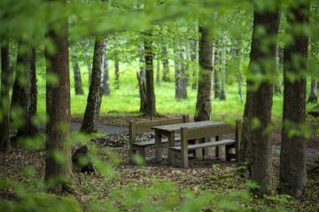 Odpočinkové místo v lesoparku - ilustrační foto.