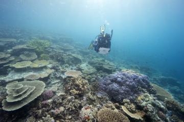 Velký bariérový útes na severovýchodním pobřeží Austrálie na snímku z 23. července 2021.