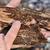 Kůrovec letos v ČR napadne rekordních až 15 milionů m3 dřeva