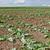 Vláda schválila dvě miliardy Kč na kompenzace za sucho